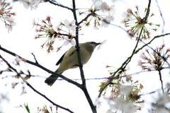 Een vogel eet de bladeren van bloemen Stock Afbeeldingen