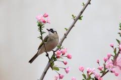 Een vogel eet de bladeren van bloemen Royalty-vrije Stock Fotografie
