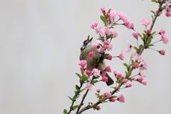 Een vogel eet de bladeren van bloemen Stock Foto