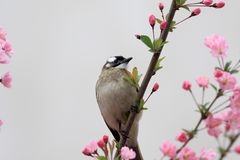 Een vogel eet de bladeren van bloemen Stock Afbeelding
