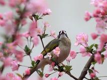 Een vogel eet de bladeren van bloemen Stock Fotografie