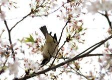 Een vogel eet de bladeren van bloemen Stock Foto's