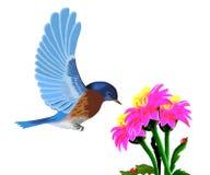 Een vogel met blauwe vleugels en een rood bloeien stock illustratie