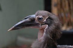 Een vogel met een lange neus royalty-vrije stock foto's
