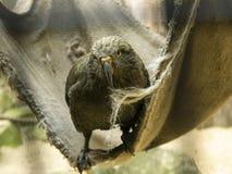 Een vogel met een scherpe bek stock foto