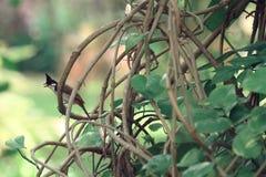 Een vogel op cirrus stock foto
