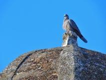 Een vogel op de bovenkant van een steenkoepel Stock Afbeeldingen