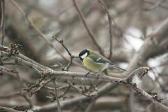 Een vogel op de takken van een boom Royalty-vrije Stock Fotografie