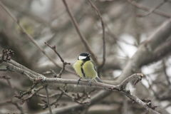Een vogel op de takken van een boom Royalty-vrije Stock Foto