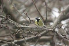Een vogel op de takken van een boom Stock Foto