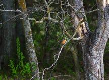 Een vogel op een boom Royalty-vrije Stock Afbeeldingen