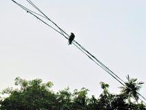 Een vogel op een lijn Stock Afbeelding