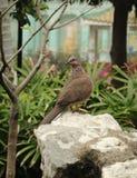 Een vogel op een rots stock foto