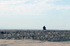 Een vogel op een steenomheining, waarvoorbij het overzees en de hemel Het concept eenzaamheid Stock Afbeeldingen