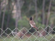 Een vogel op een omheining stock foto