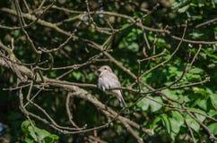 Een vogel op een tak Stock Foto