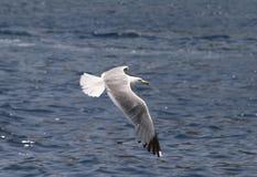 Een vogel over het overzees Royalty-vrije Stock Fotografie