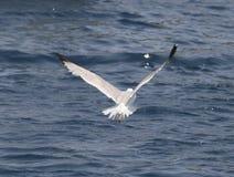 Een vogel over het overzees Stock Afbeeldingen