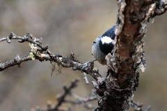 Een vogel is schuwe fotograaf Stock Afbeeldingen