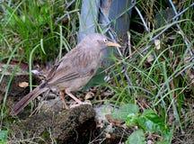 Een vogel verbergt zich in gras stock fotografie
