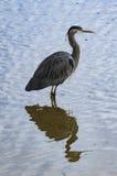 Een Vogel Visserij Stock Foto's