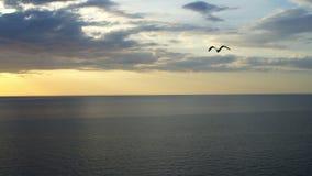 Een vogel vliegt over het overzees stock videobeelden
