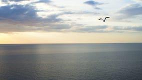 Een vogel vliegt over het overzees stock video