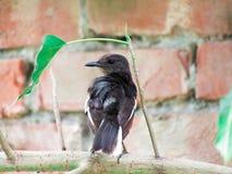 Een Vogel ziet verschillend eruit - Ekstervogel zo Nice stock foto's
