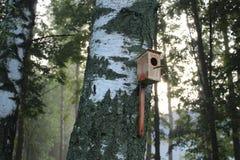 Een vogelhuis op een berkboom in een nevelig bos stock afbeelding