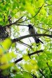 Een vogelzitting op een tak Stock Afbeelding