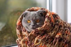 Een volbloed haakt in een sjaal bekijkt uit het venster de zon Royalty-vrije Stock Foto's