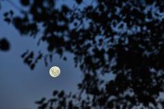 Een volle maannacht, nightscape Royalty-vrije Stock Foto