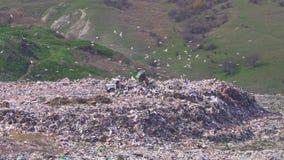 Een vrachtwagen maakt afval bij een grote stortplaats leeg waar vele vogels vliegen De verontreiniging stock video