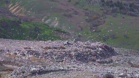 Een vrachtwagen maakt afval bij een grote stortplaats leeg waar vele vogels vliegen verontreiniging stock footage