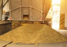 Een vrachtwagen maakt korrel bij een van de korrelopslag en verwerking installatie, een faciliteit van de korrelopslag, het leegm stock afbeelding