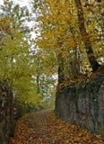 Een vreedzame manier tussen bladeren en bomen Stock Foto's
