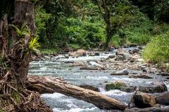 Een vreedzame rivier in Papoea-Nieuw-Guinea royalty-vrije stock afbeeldingen