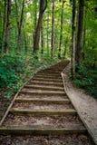 Een vreedzame trap binnen een weelderig bos stock fotografie