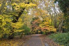 Een vreedzame weg in een de herfstpark stock afbeeldingen