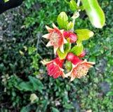 Een vreemde bloem Royalty-vrije Stock Afbeeldingen