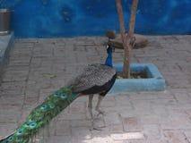 Een vreemdere vogel bij mijn huis stock foto