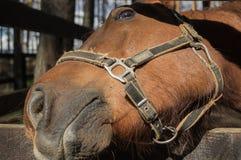 Een vriendschappelijk grappig paard Royalty-vrije Stock Fotografie