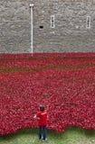 Een Vrijwilliger bij de Toren van Londen Poppy Installation Royalty-vrije Stock Fotografie