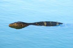 Een vroege ochtendzwemmer, jongelui controleert hagedis, op een mooie, hemel-blauwe, weerspiegelende vijver stock fotografie