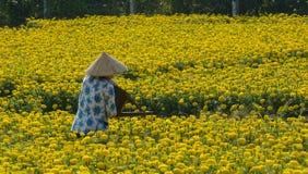 Een vrouw die bij bloemaanplanting werken Royalty-vrije Stock Afbeeldingen