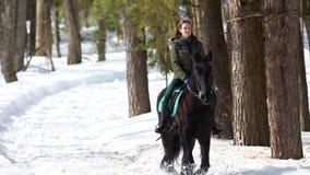 Een vrouw die een donker bruin paard in het bos berijden bij zonnig weer stock footage