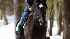 Een vrouw die een donker bruin paard in het bos berijden stock video