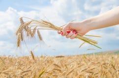 Een vrouw die een stapel van tarwe houden Stock Foto's