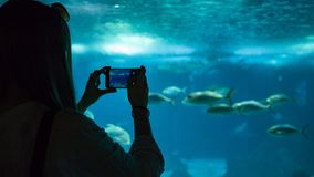 Een vrouw die foto van de vissen maken onder water stock afbeeldingen