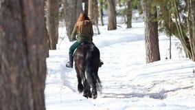 Een vrouw die op een paard in een de winterbos lopen op een sneeuwweg stock footage
